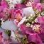 Поляна орхідей (корзина з орхідей) - 3