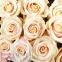 Кремова  мрія (101 кремова троянда) - 2