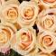 51 кремова троянда - 1