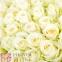 101 біла троянда - 1