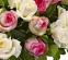 """Корзина """"Для найніжнішої"""" (51 троянда) - 2"""