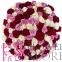 101 кольорова троянда - 2